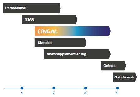 cingal-infografik3
